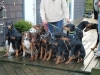 Maple Ridge Dobermans