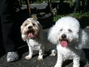 Mitsy & Bijou